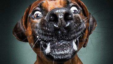 Снимки на кучета, улавящи храната си. Израженията им са просто безценни!