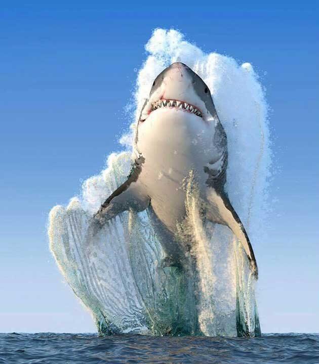 Перфектният кадър на голяма бяла акула