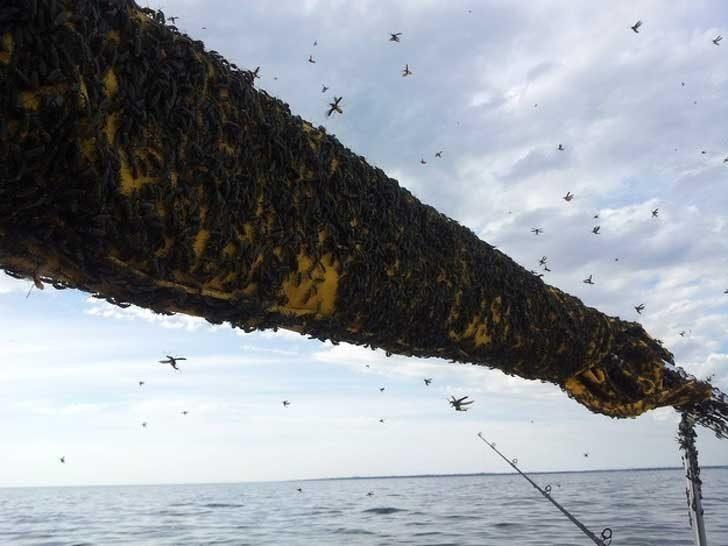 Ето как изглежда риболовът понякога