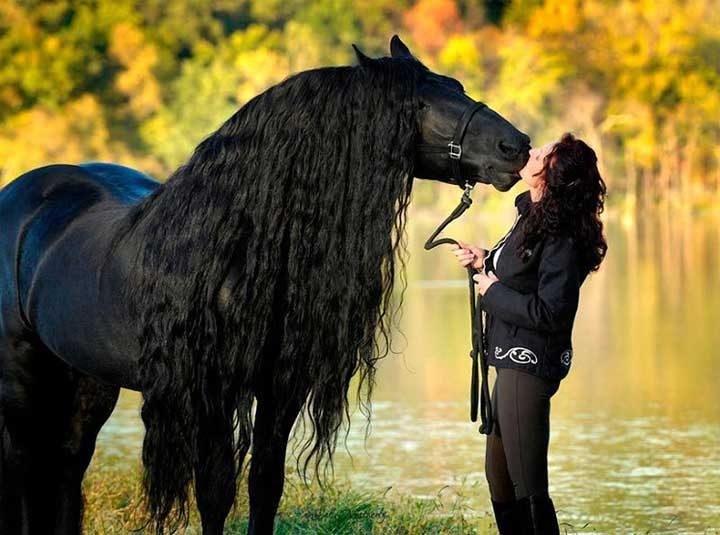 Фредерик Велики - най-красивият кон в света