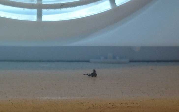 Това е просто перваз на прозорец, но изглежда като истински морски пейзаж
