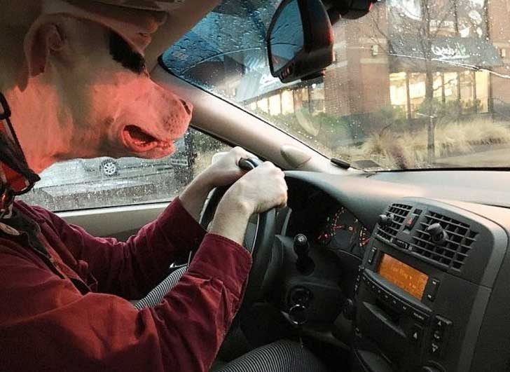 Един много внимателен шофьор