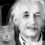 Собствениците на котки са по-интелигентни според научно изследване