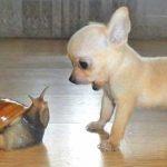 Животните имат емоции и понякога им е трудно да ги прикрият
