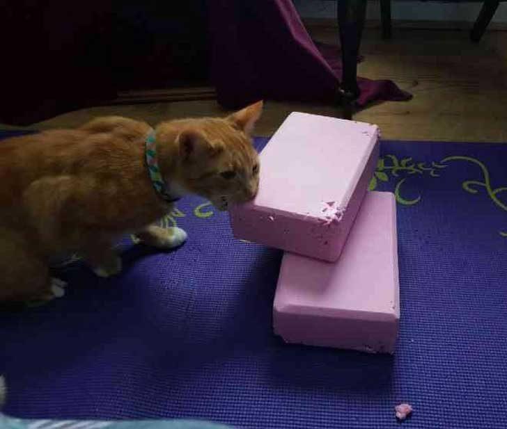"""""""Мама не спира да купува от онези йога блокчета... А котката ѝ мисли, че има и по-добри начини да си отпуснеш душата"""""""