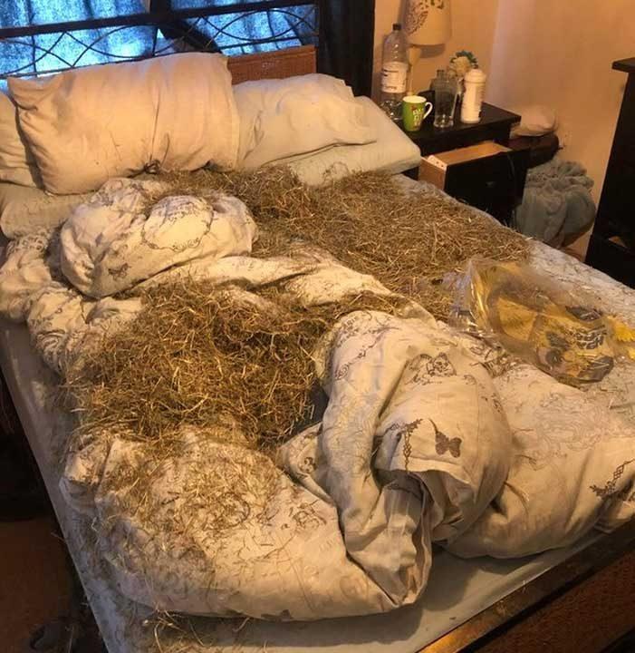 Когато кучето ти те обича толкова много, че реши да направи леглото ти по-удобно за теб