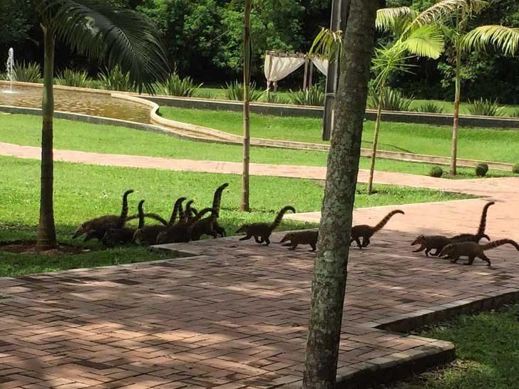 Ако и ти видя група преминаващи динозаври, вгледай се по-внимателно