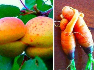 23 поразителни плодове и зеленчуци, които изглеждат като живи