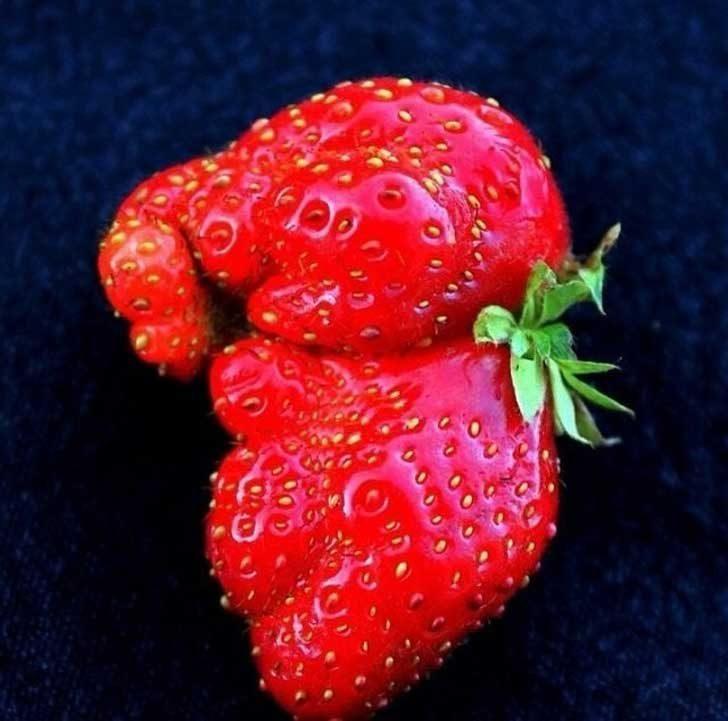 Тази ягода изглежда като бебе слон