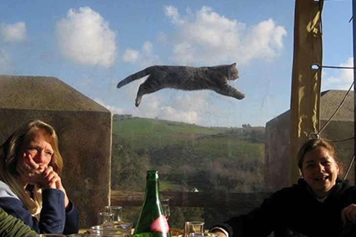 """""""Това е снимка от нашето малко парти. Не обръщай внимание на летящата котка"""""""