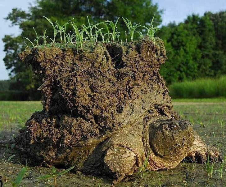 Костенурка, събуждаща се от хибернация