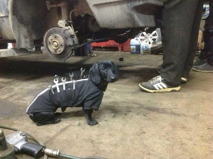 """""""Аз съм куче-механик и днес съм на смяна"""""""