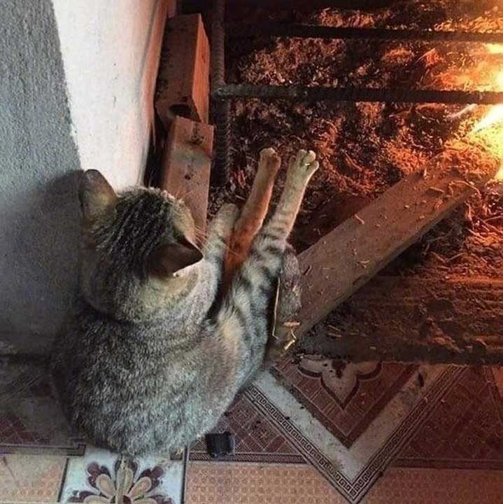 Котките също обичат да релаксират край огъня