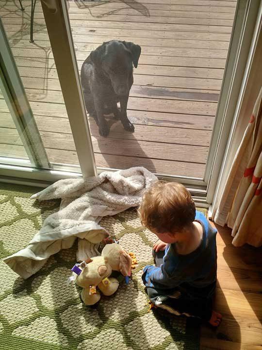 """""""Синът ми храни кученцето си играчка със златни рибки, докато истинското ни куче стои отвън леко изнервено от обстоятелствата"""""""
