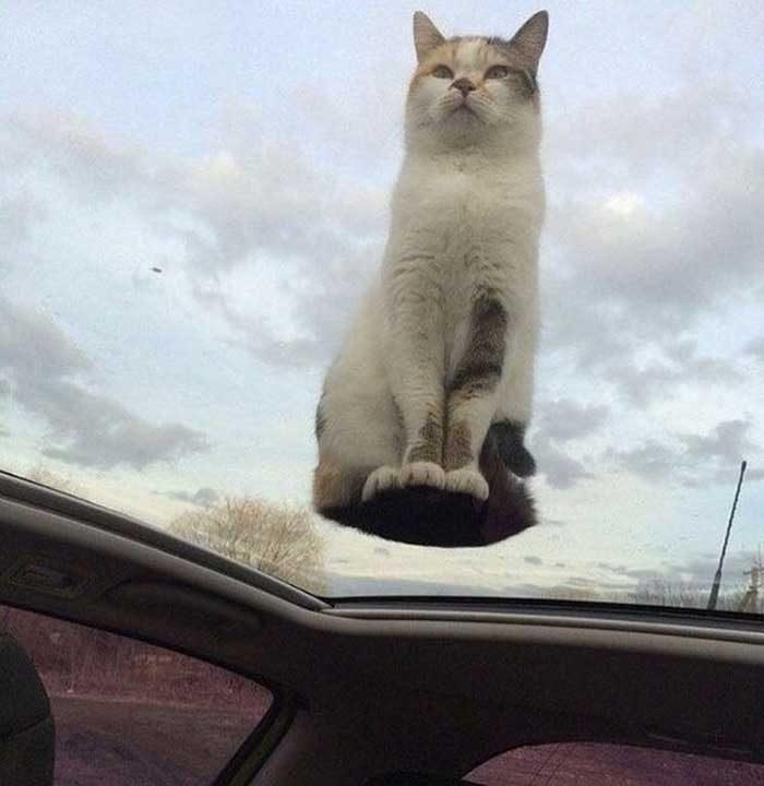 """""""Моята летяща котка"""""""