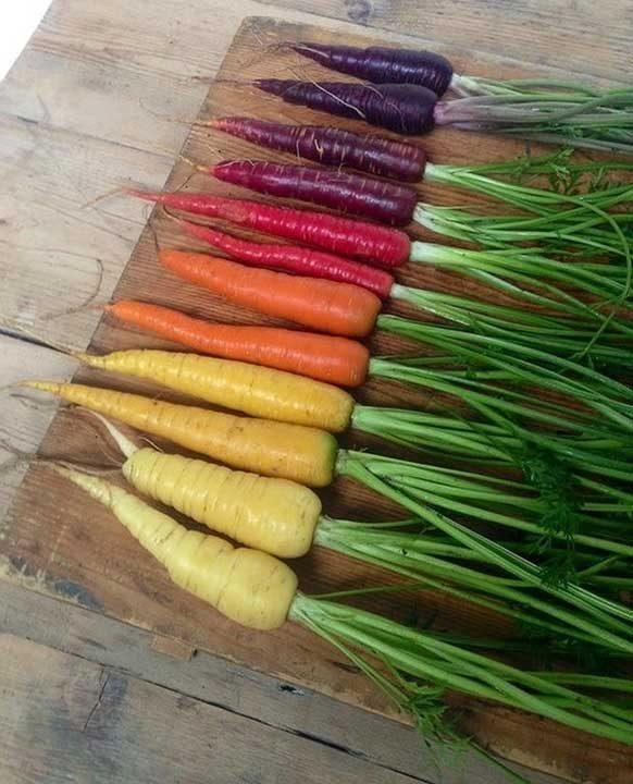 Нищо чудно, че морковите са добри за зрението... Те са направени от цветовете на дъгата