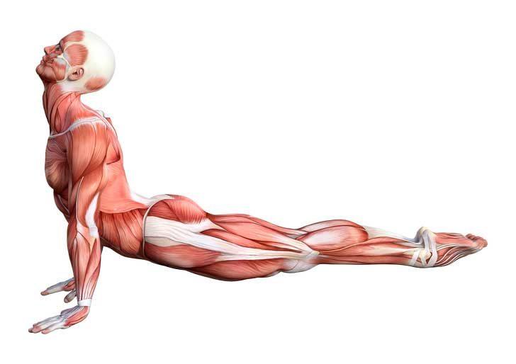 Разтягане на гърба