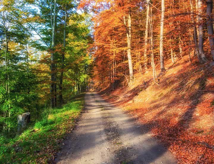 Есенна гора - изглежда така, сякаш природата е изтеглила само 50% от своята нова визия