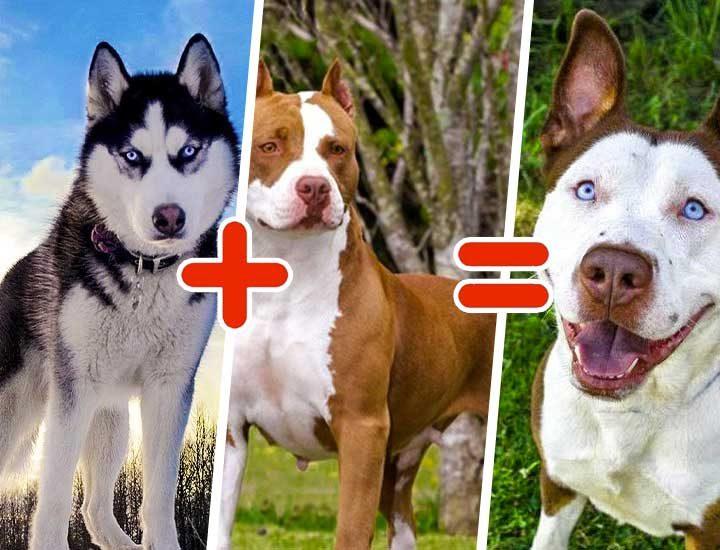 15 кучета от смесени породи, които ще те изумят със своята уникална красота