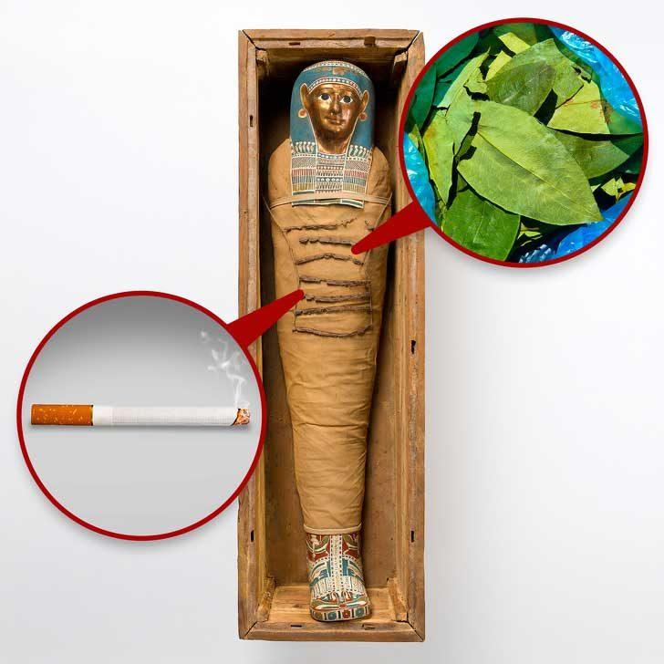 Кока и тютюн в египетските мумии, които предполагат контакти с американския континент