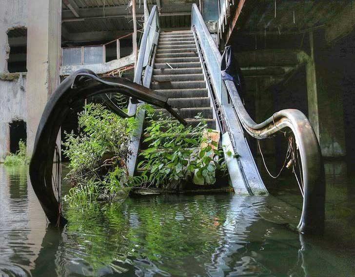 Растенията вече са единствените, които изкачват този ескалатор