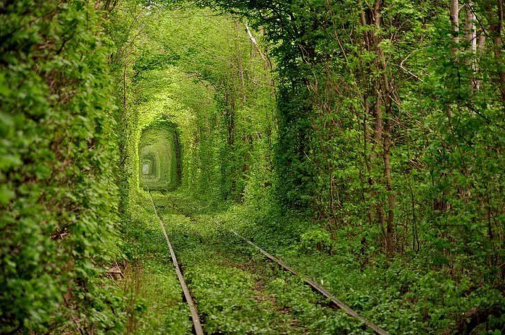 Изоставена железопътна линия, превърнала се във великолепен зелен тунел
