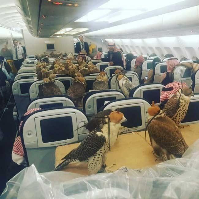 В случай на авиоинцидент, птиците спокойно могат да задържат самолета във въздуха