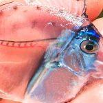 20 необикновени животни, все едно дошли от фентъзи филм