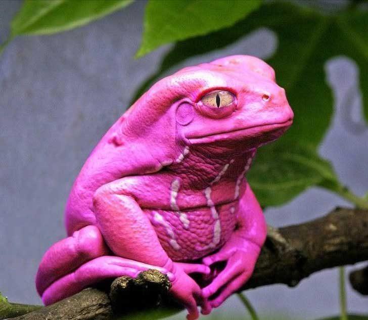 Една бляскава жаба