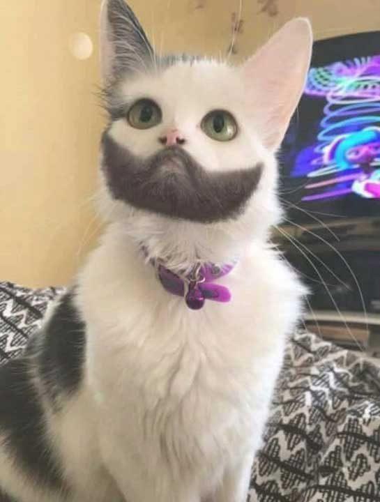 Котка с брада