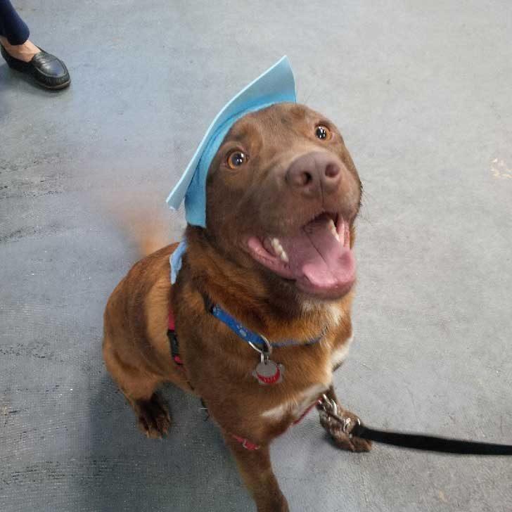 """""""Кучето ми се дипломира от детската градина за домашни любимци"""""""