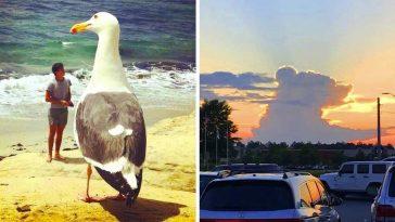 20+ снимки, които ще те накарат да не вярваш на очите си