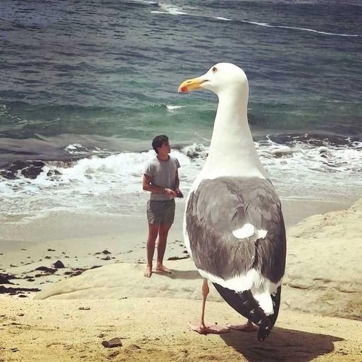 """""""Никой не ме предупреди, че на плажа има такива чайки!..."""""""