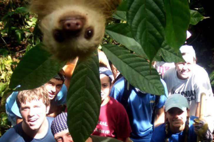 Фотобомба от ленивец