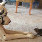 24 снимки на кучета и котки, които ще разтопят сърцето ти