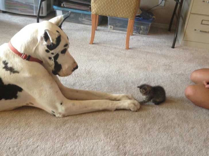 Малкото бебе иска да си играе със своя голям приятел