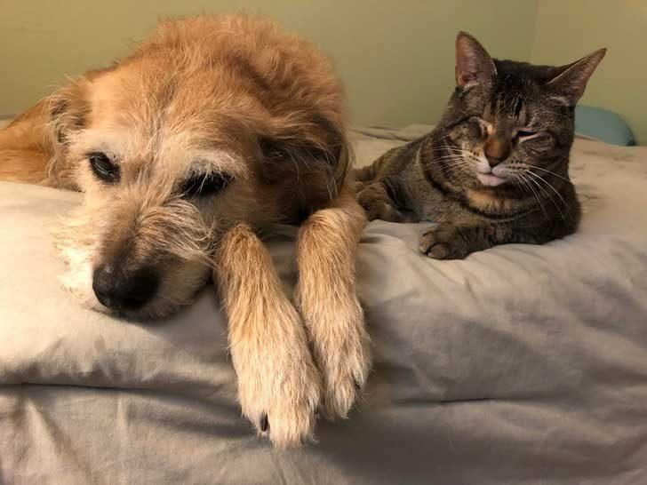 Това куче се грижи за котката, загубила окото си