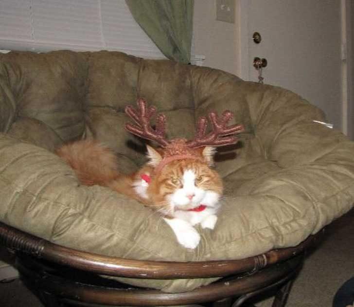 """""""Родителите ми се промъкнаха вкъщи, само за да маскират котката ми като елен на Дядо Коледа"""""""