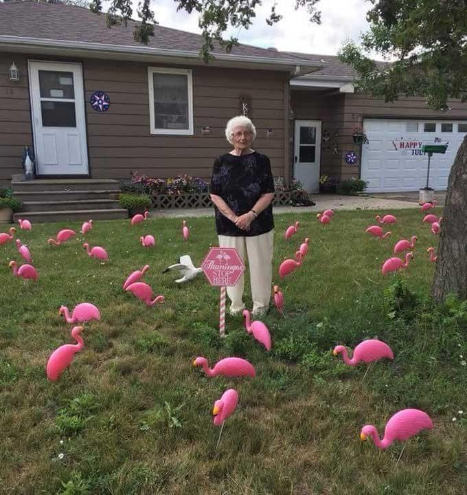"""""""Баба ми навършва 93 години днес. Тя винаги е имала чувство за хумор, затова решихме да я изненадаме, като декорираме двора ѝ с 93 розови фламинги"""""""