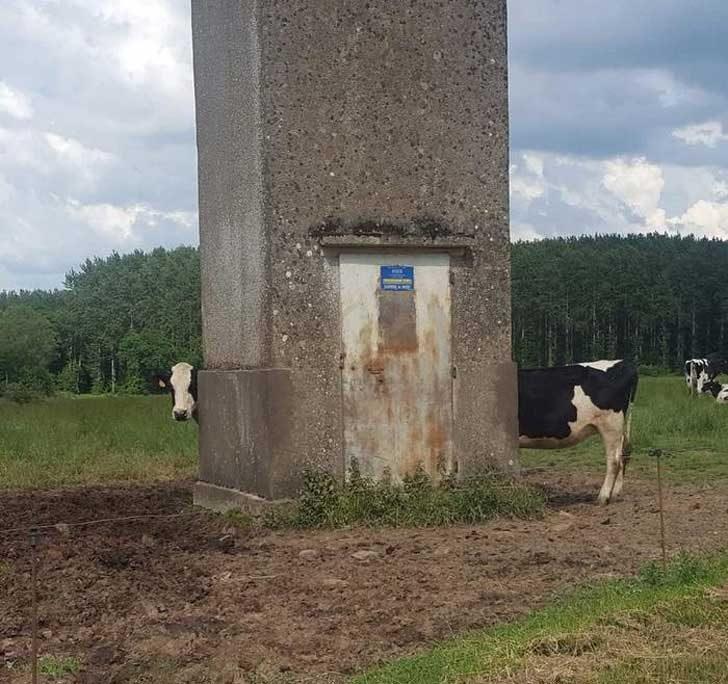Изглежда тази крава е открила портал в пространството