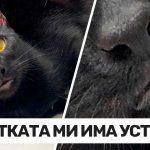 20 специални котки, получили уникален дар от природата