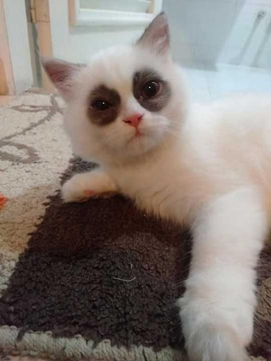Как изглежда котка, която не си доспива...