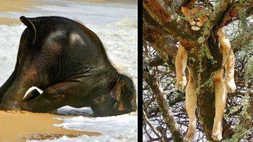 20+ смешни снимки на спящи животни в нелепи пози