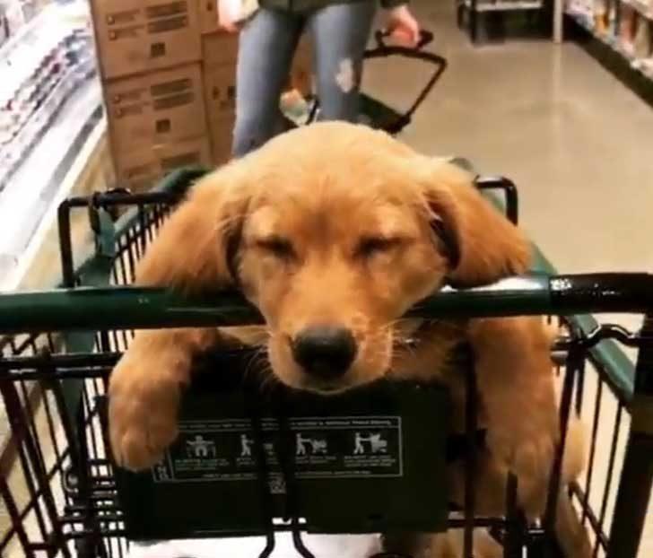 """""""Събуди ме, ако имаш нужда от помощ с пазаруването"""""""