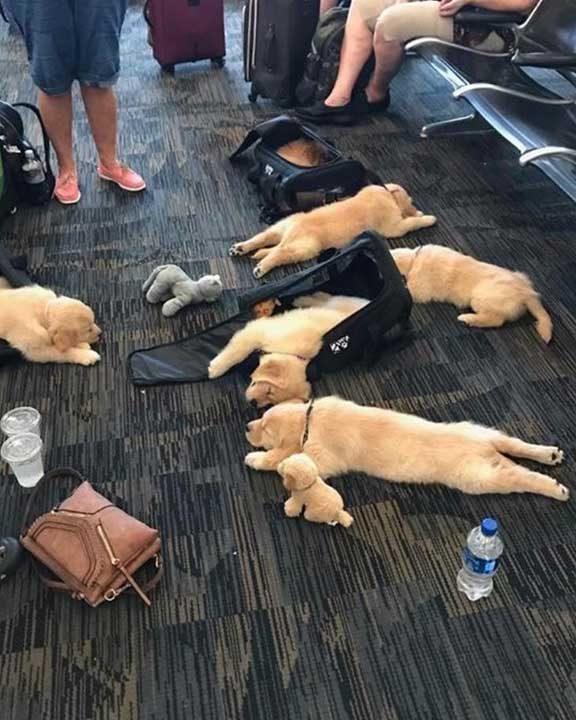 Дългите полети са изтощителни за всички
