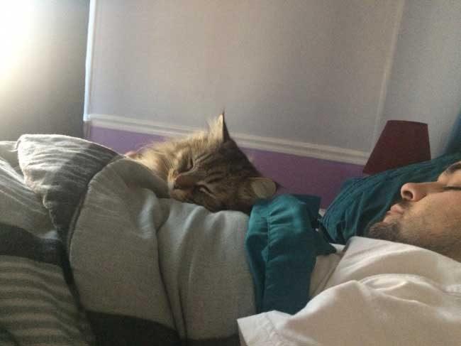 Мъжете обикновено казват, че котките не са техните животни. А по-късно са така...