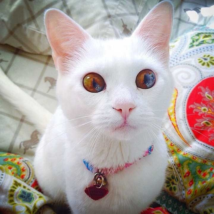 Очи, побиращи целия свят