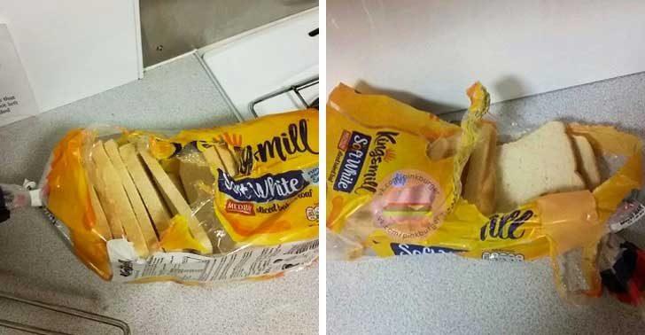 """""""Един от съквартирантите ми отваря хляба така! Това не е ли варварство?!"""""""