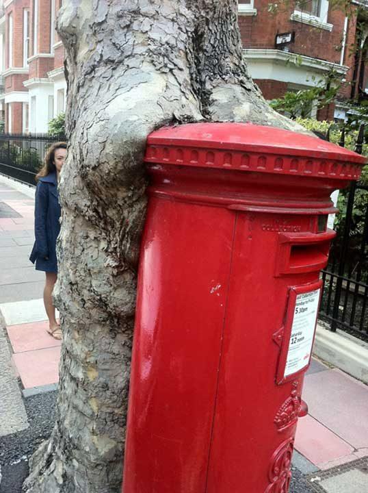 Дърво, погълнало пощенска кутия