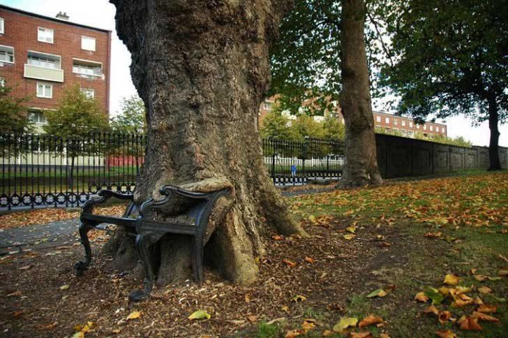 Още едно дърво, поглъщащо нещо, този път това е пейка